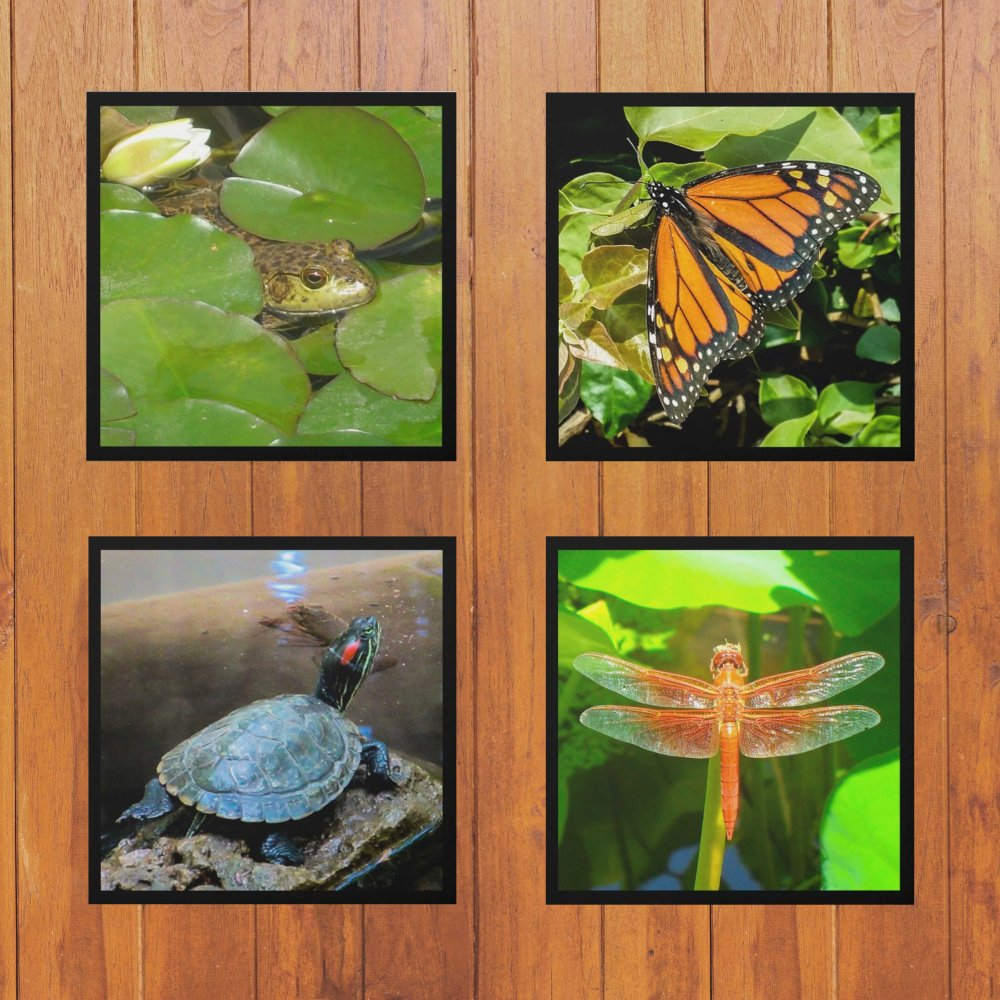 beautiful-surfaces-framed-photo-set-on-wall