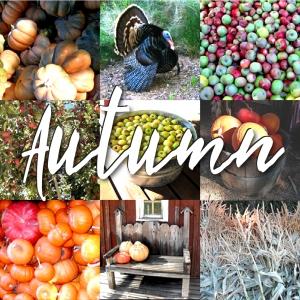 autumn-post-header-beautiful-surfaces